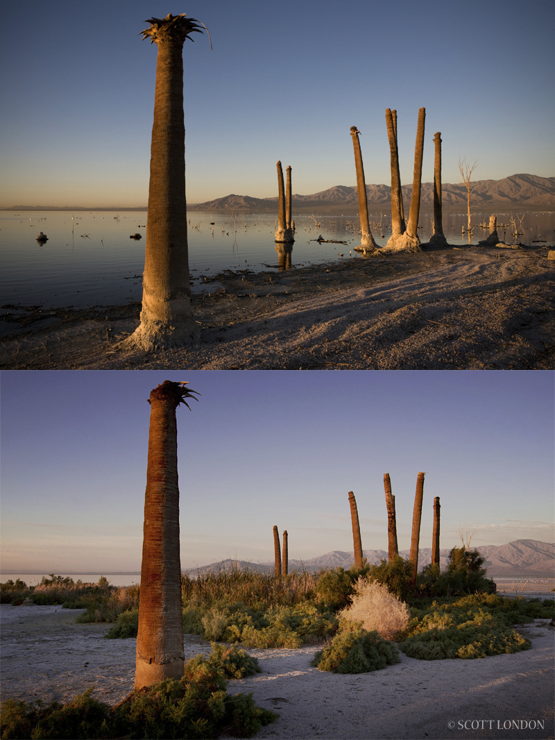 The Salton Sea's receding shoreline