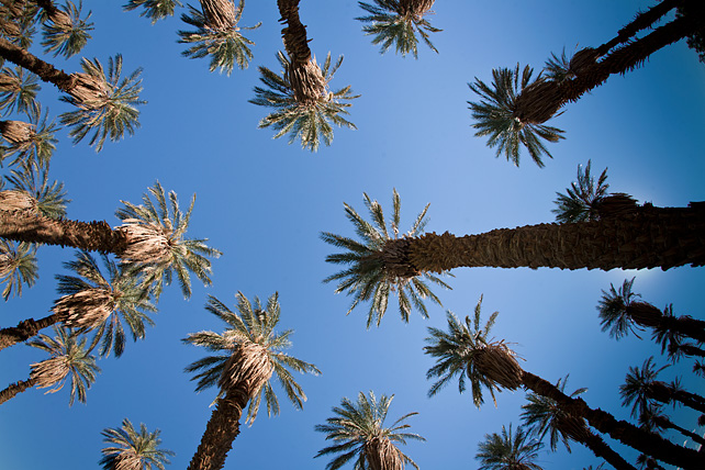 Palms at Furnace Creek